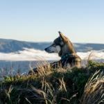 z psem w góry