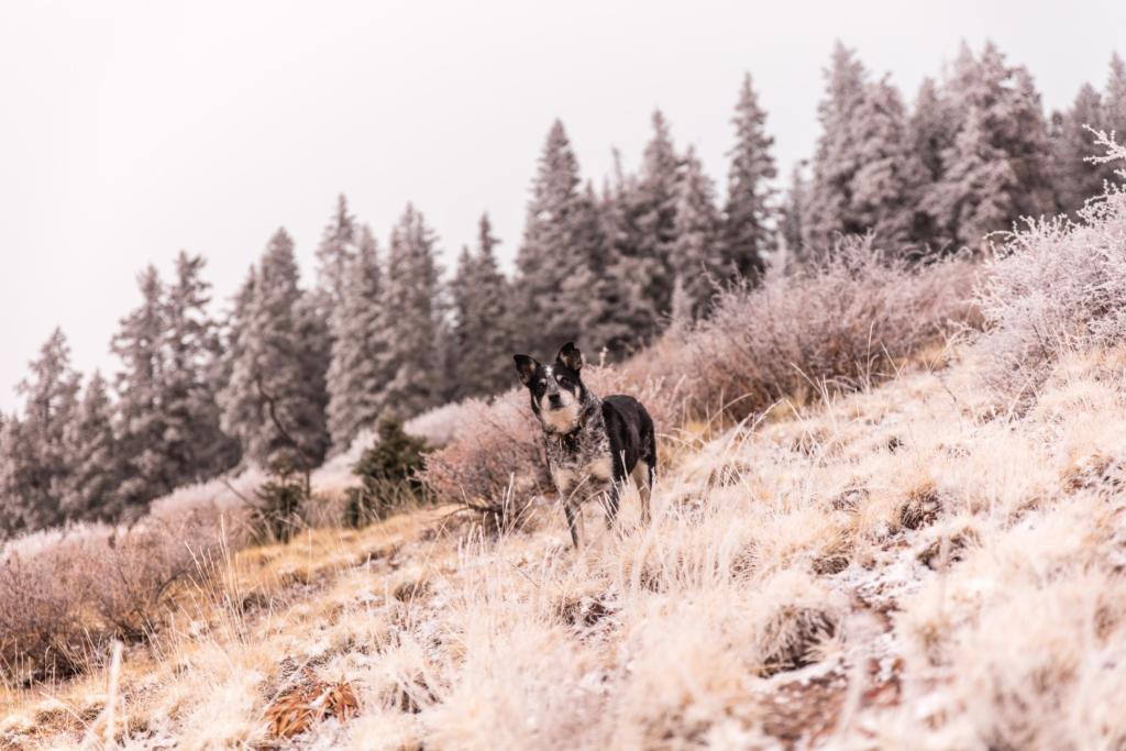 pies w górach na skarpie