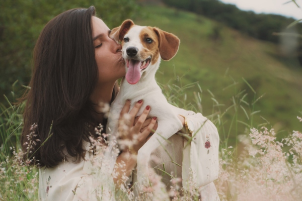 Pies dla singla
